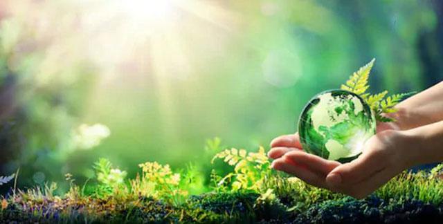 Bảo vệ rừng là gì?