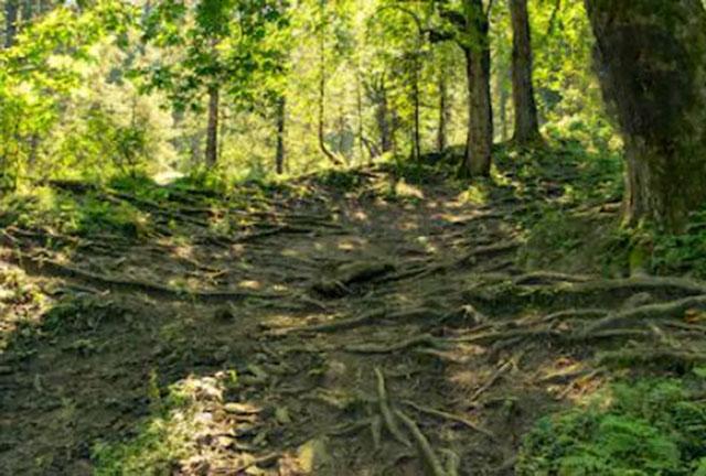 Rừng giúp chống xói mòn, sạt lở đất và chống lũ lụt: