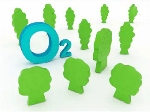 Rừng tạo ra một lượng lớn khí oxy cho con người: