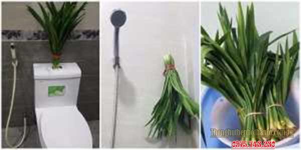 7. Khử mùi hôi nhà vệ sinh bằng lá dứa: