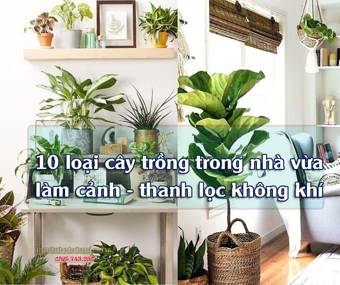Tên 10 loại cây trồng trong nhà làm cảnh thanh lọc không khí